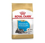 ROYAL MINIATURE SCHNAUZER PUPPY 1.5Kg